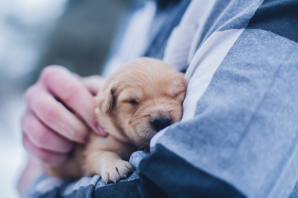 Mobile Veterinarian puppy in arms