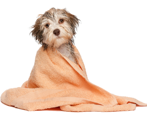 Dog Vaccinations - puppy with blanket
