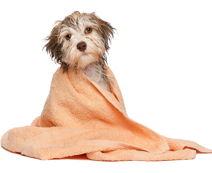 After Hours Vet Sunnybank- wet dog