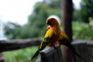 Bird Vets Brisbane