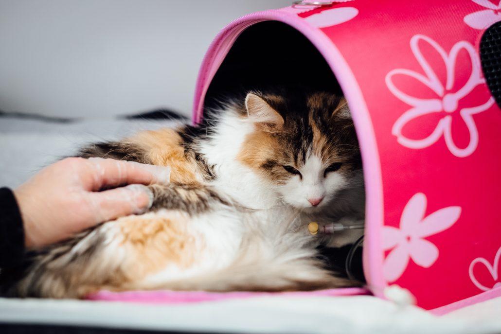 emergency vet care Sunnybank - kitten in bag