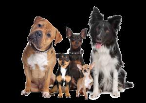 animal doctor - variety of dog breeds