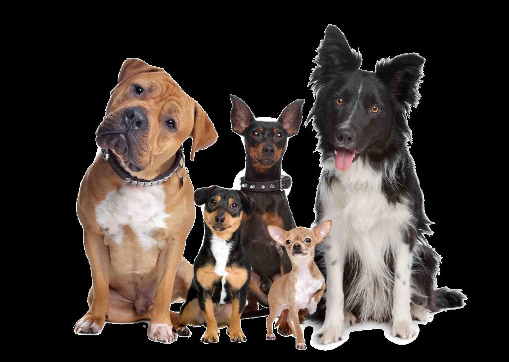 Emergency Vet Kenmore - various dog breeds
