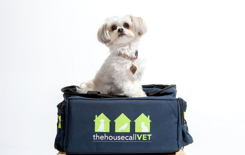 house call vet Kenmore - dog on bag