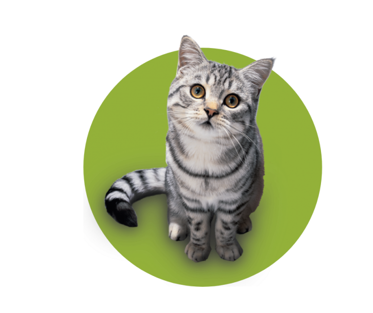 f3 vaccination - cat and green circle