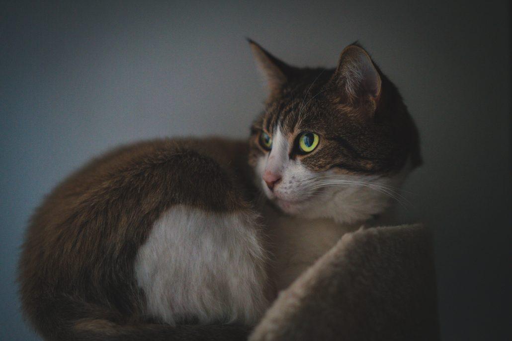 Cat Emergency Vet