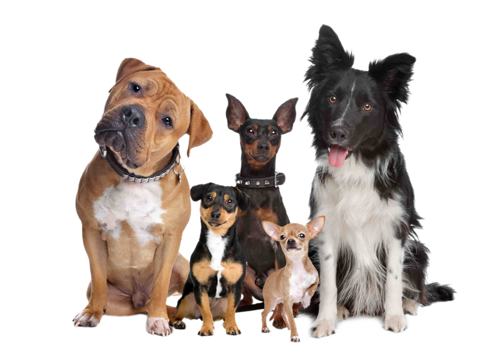 How To Get Rid Of Fleas In Dogs