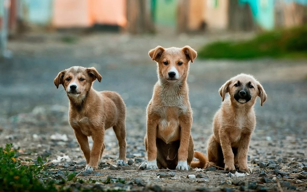 dogs with anxiety symptoms three puppies