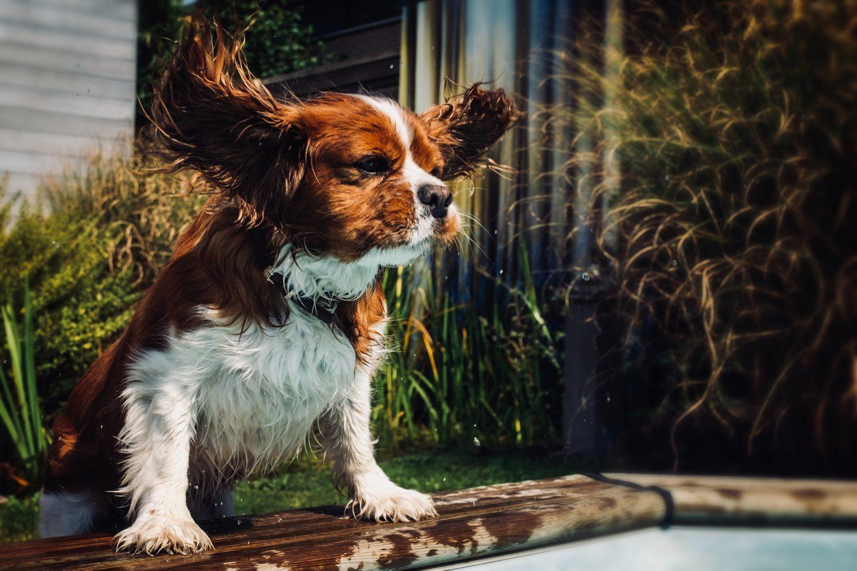 mobile vet clinic moorooka dog and ears