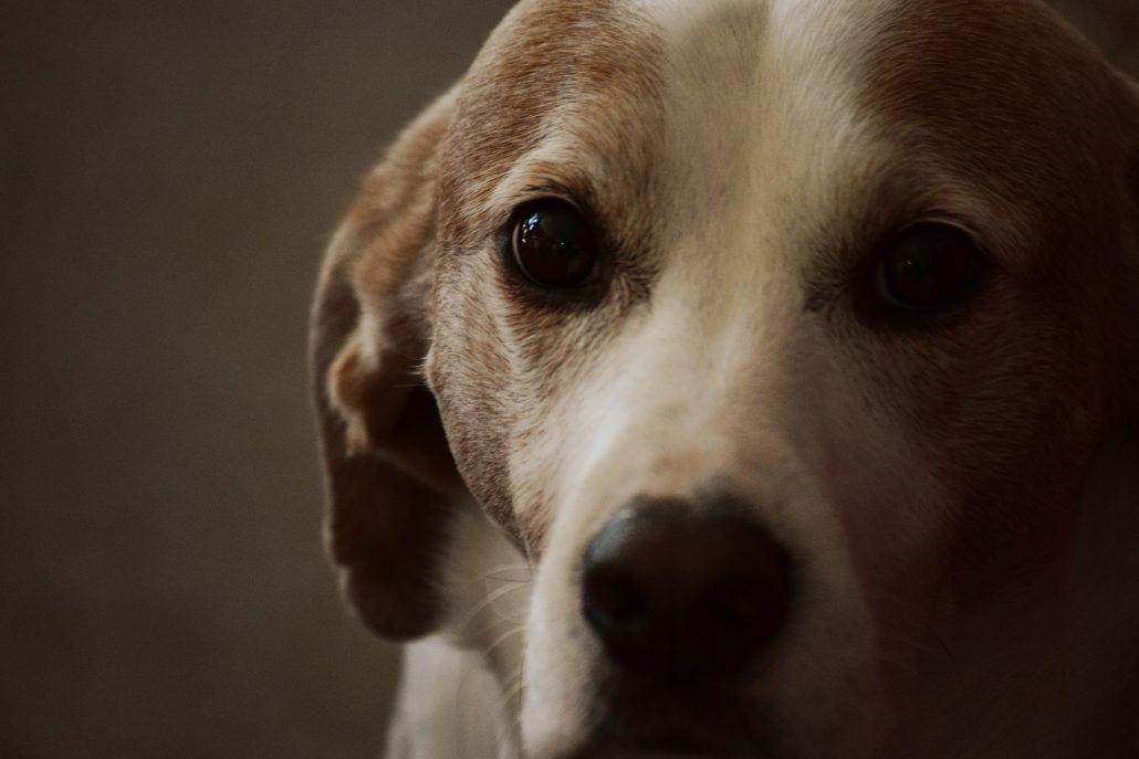 animal doctor - dog closeup