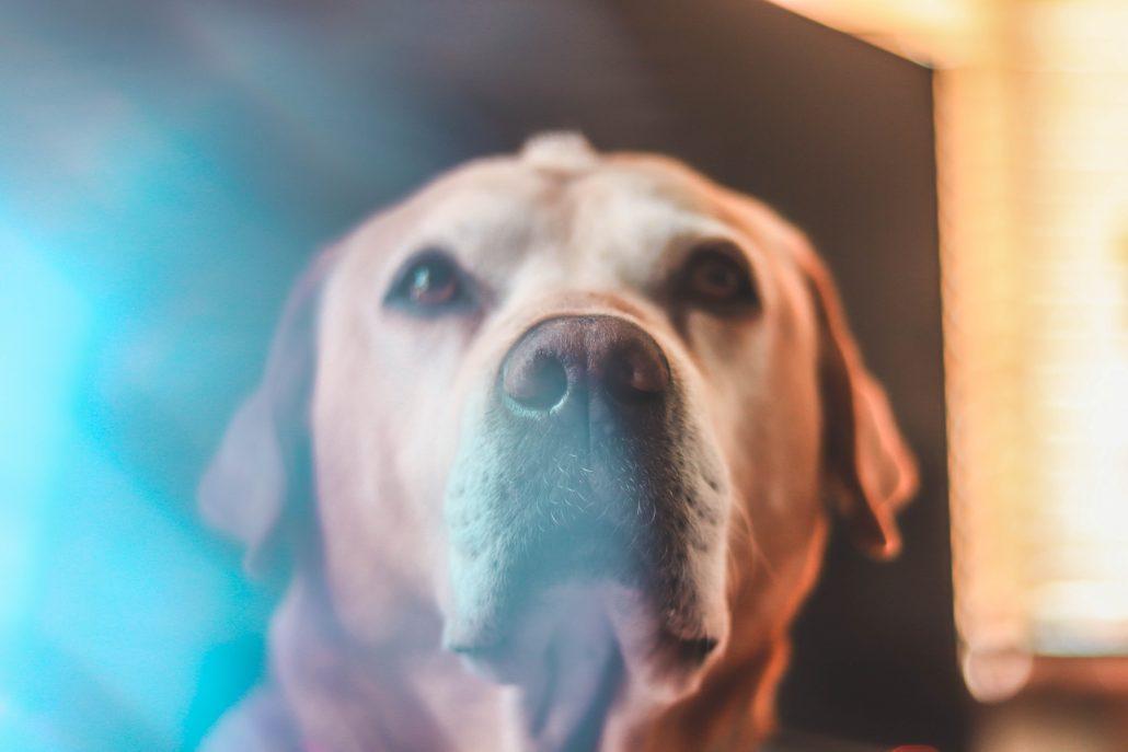 Dog Euthanasia - dog with feather on head