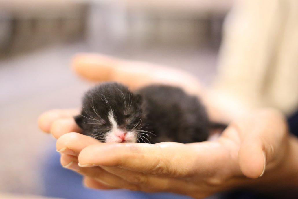 mobile vet - kitten in palms
