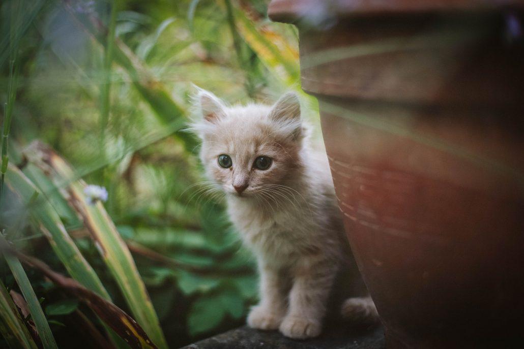 after hours vet south brisbane - kitten behind wall