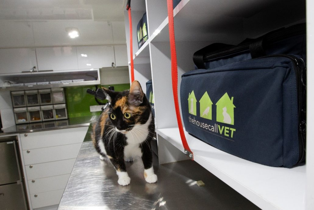 after hours Veterinary clinic calico cat at vet office