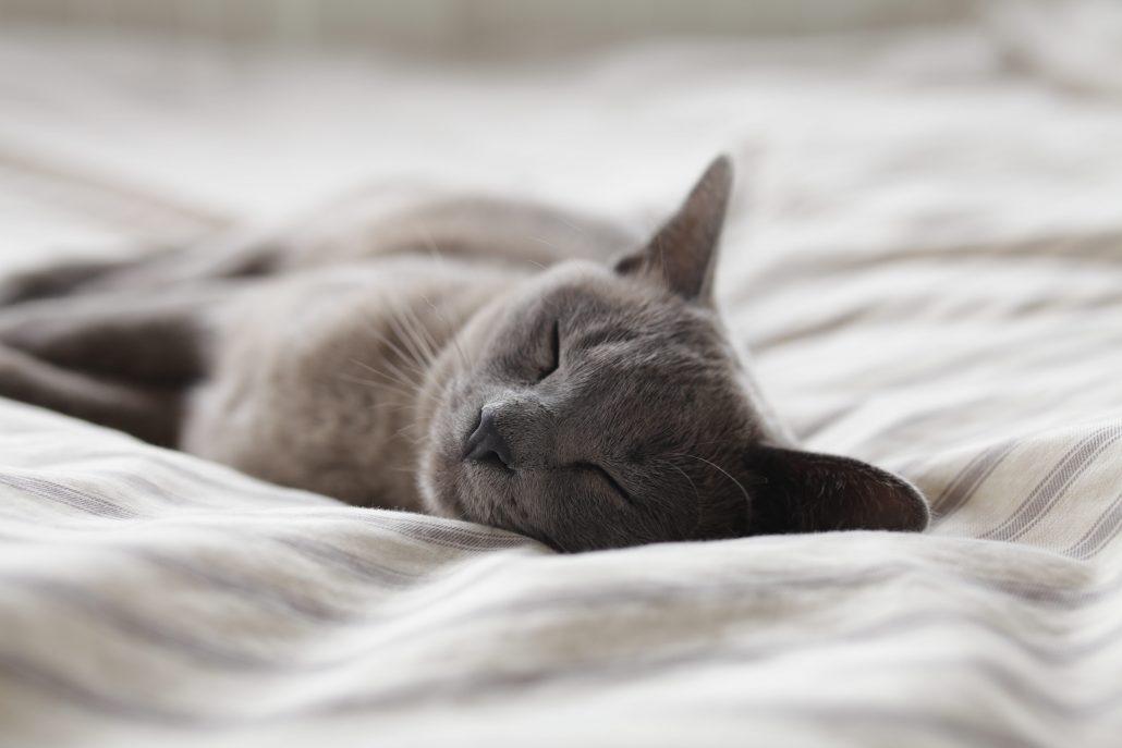 Mobile Pet Euthanasia - sleeping grey cat