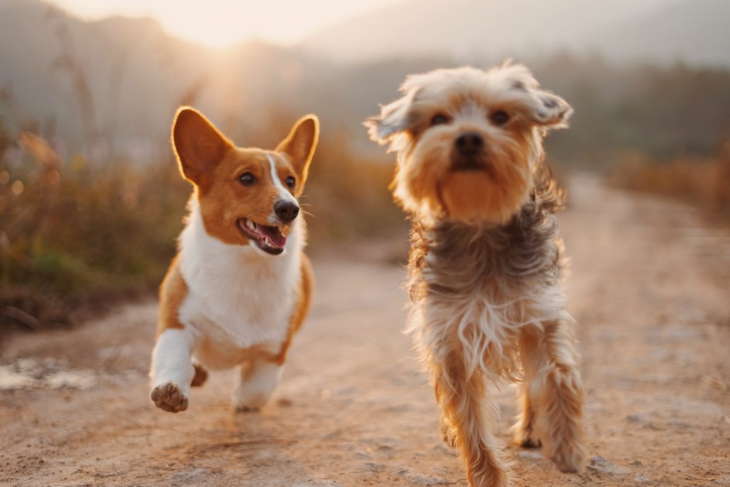 Animal Emergency Center - running dogs