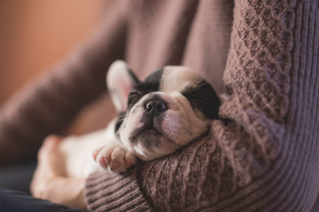 coping with the loss of a pet - puppy in arms