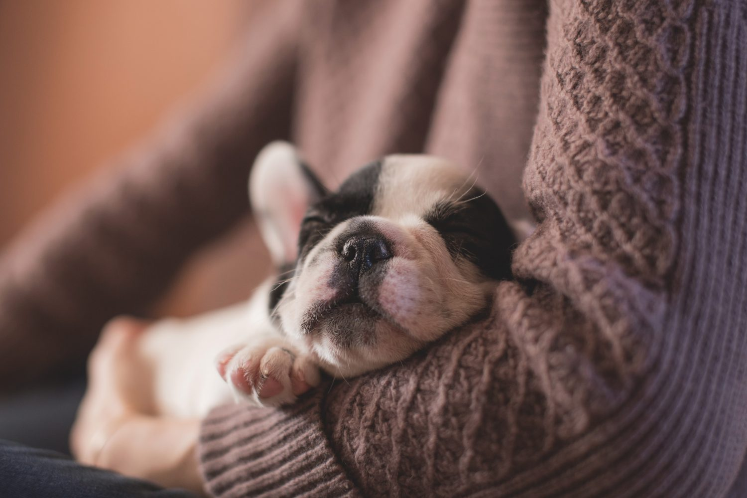 The Importance Of Pet Vaccination - puppy in arms
