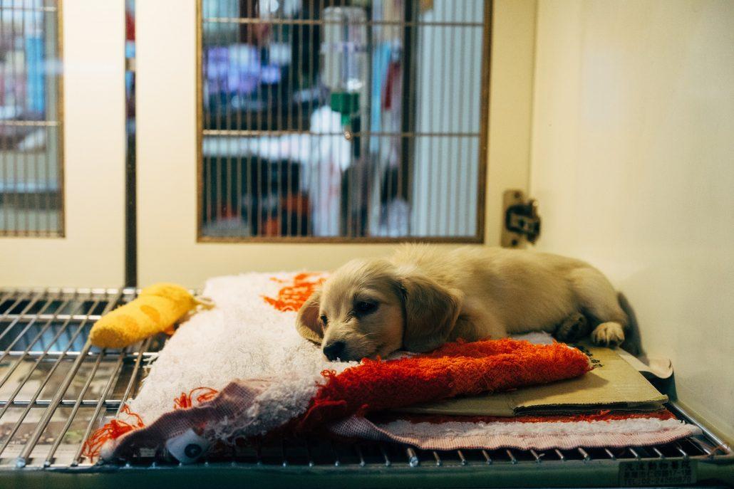 Vet hospital - puppy at vet