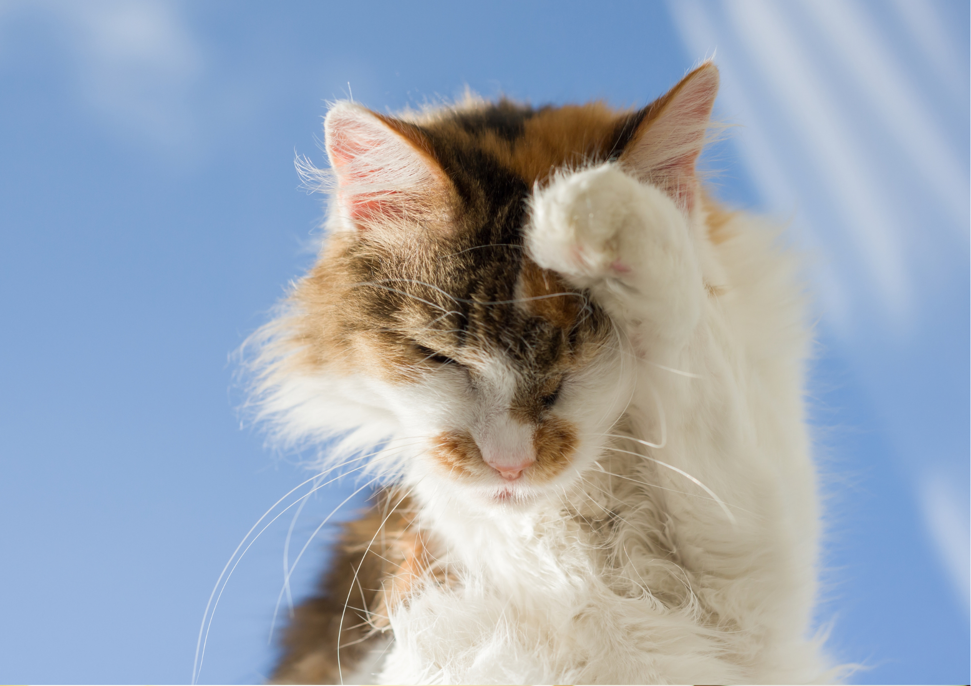 The Importance Of Pet Vaccination - scratching cat