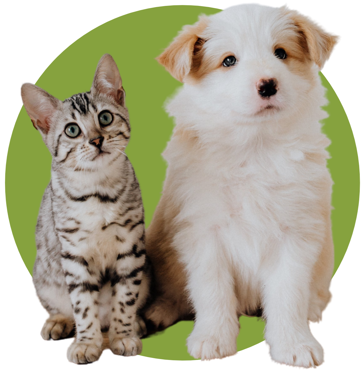 Indooroopilly vets - puppy and kitten