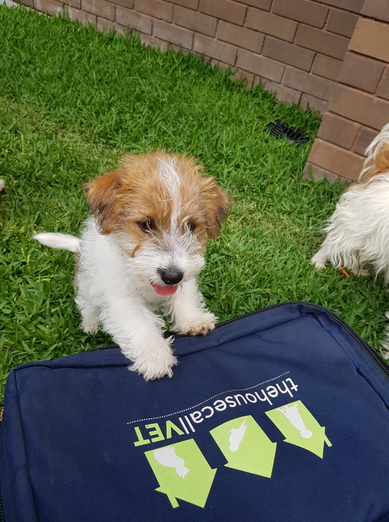 Dog C5 Vaccinations - puppy and bag