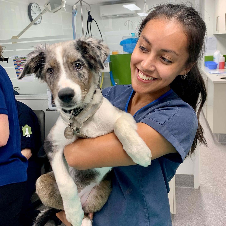 mobile vet clinic - nurse and vet
