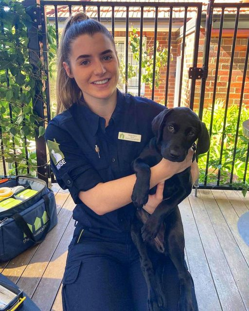 What is Ehrlichiosis - THCV staff with black lab puppy