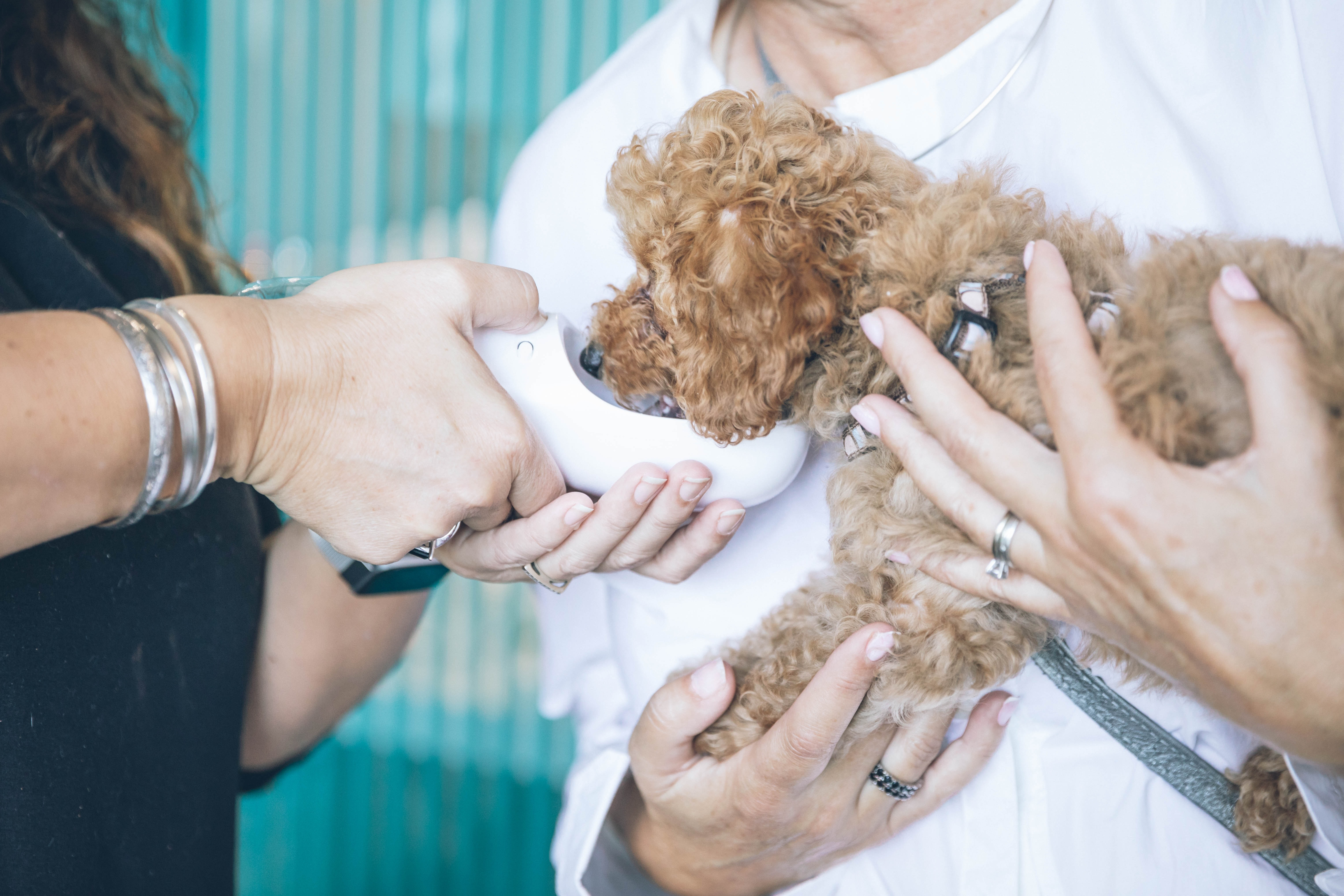 affordable vet care - dog drinking from bottle