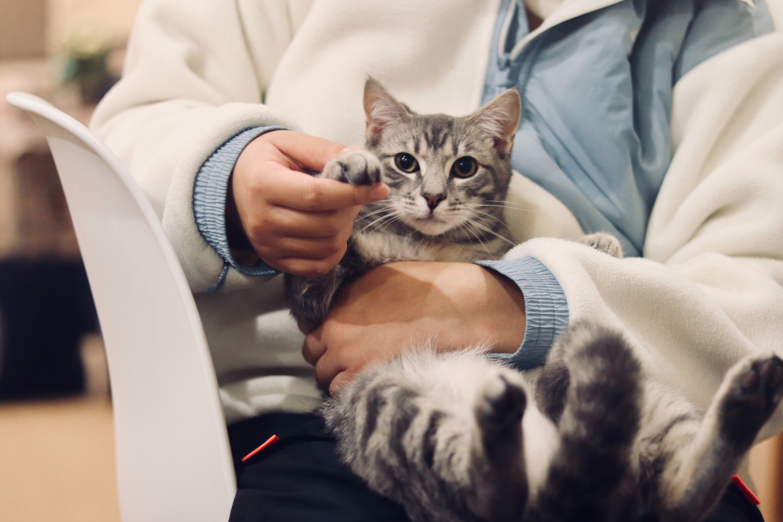 kitten injections - vet holding cat