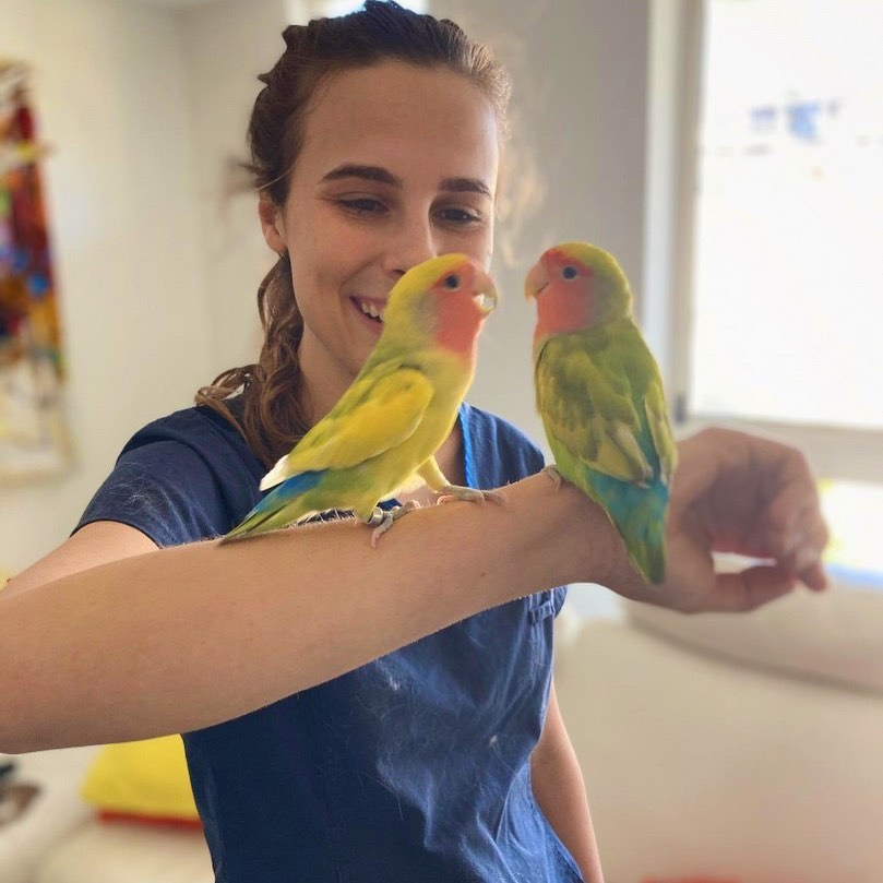 Vet Clinic- THCV staff with parrots on her arm