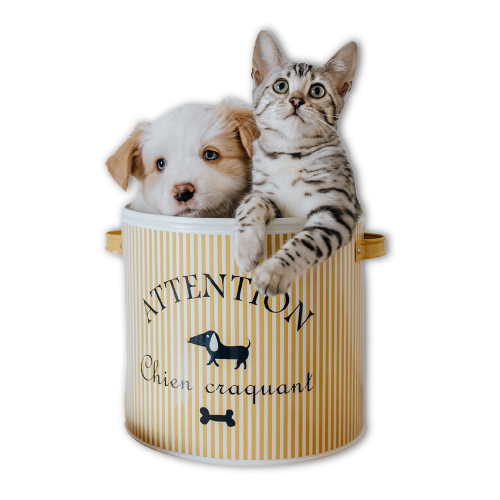 emergency vet Brisbane - puppy and kitten in a can