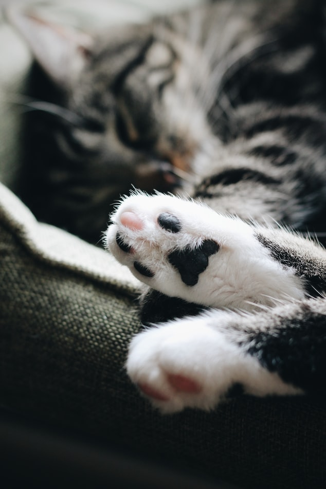 cat anxiety - cat paws