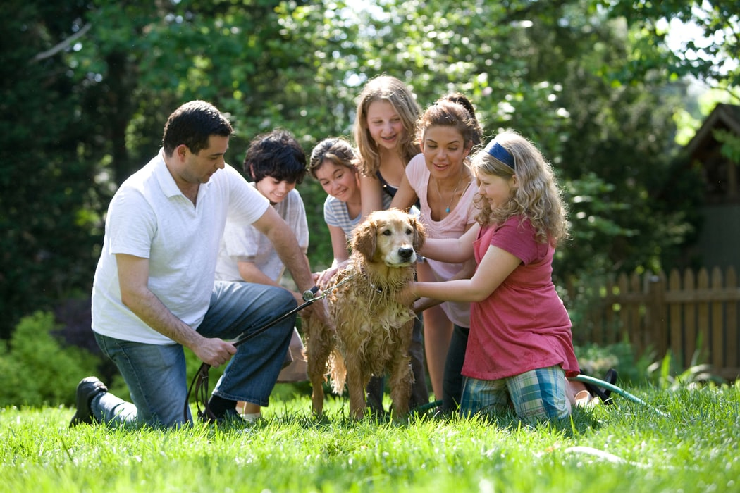preparing for tick season - family washing yellow Labrador in garden