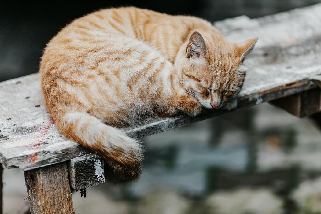 Senior Pet Care - cat on bench