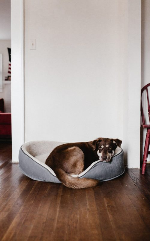 coping with the loss of a pet - dog sleeping on bed
