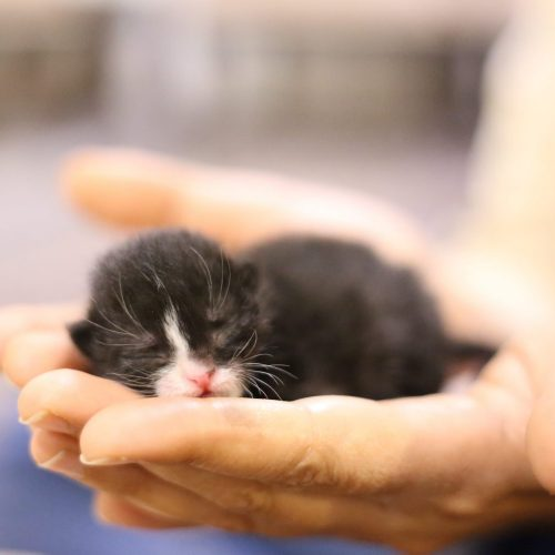c3 vaccinations - kitten in palms